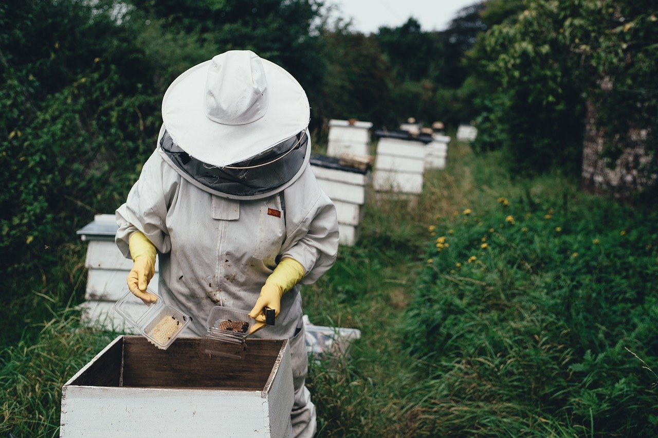 apiary, bee, bee farm